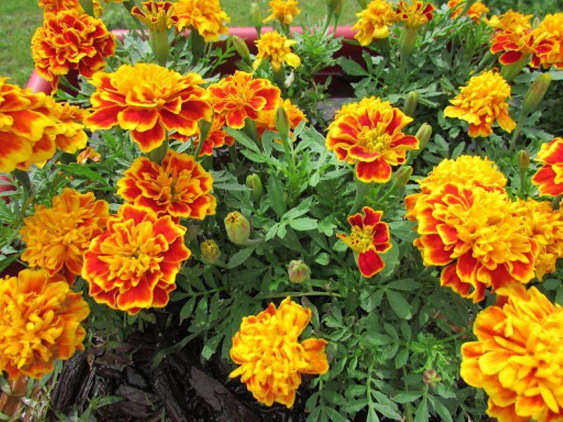 11 loại hoa bạn không nên dâng lên bàn thờ trong thờ ngày tết 7