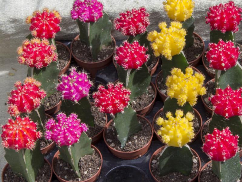 11 loại hoa bạn không nên dâng lên bàn thờ trong thờ ngày tết 4