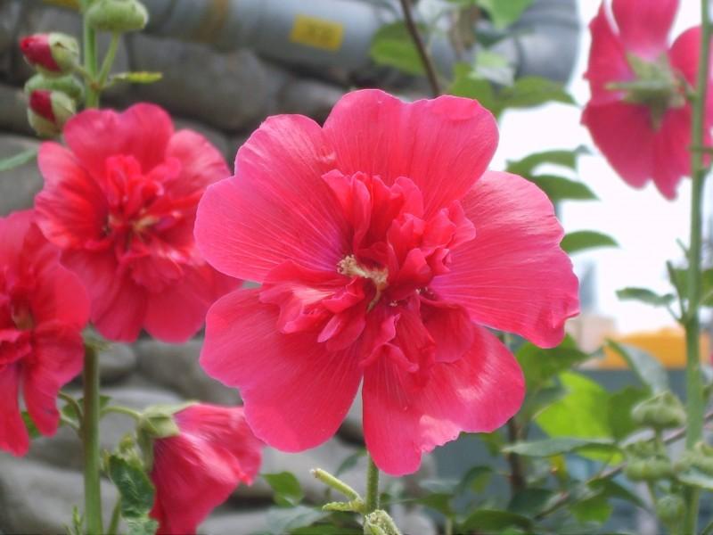 11 loại hoa bạn không nên dâng lên bàn thờ trong thờ ngày tết 2